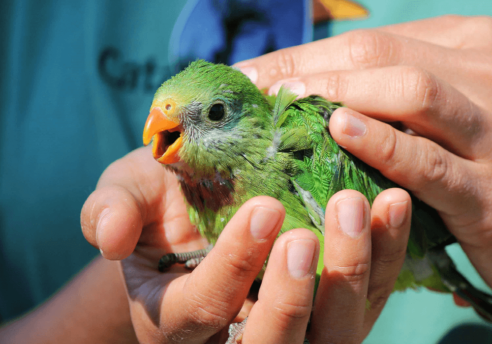 Prepare for the arrival of your pet Parrot