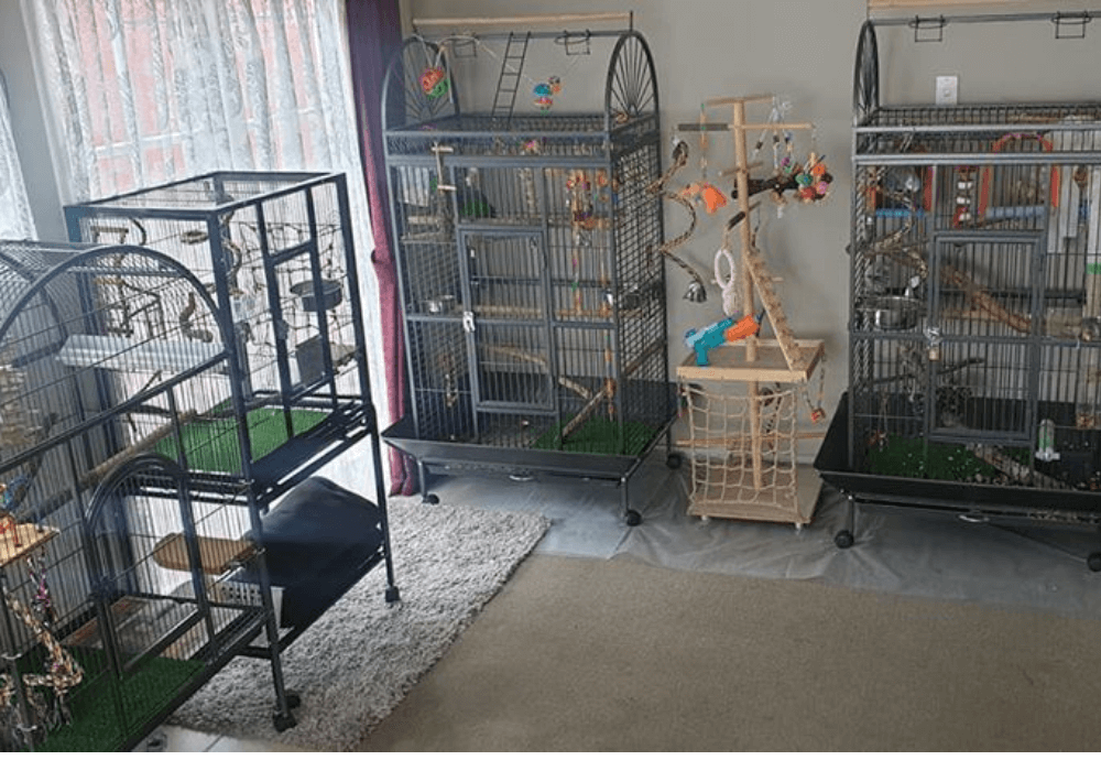 Choosing a cage for a pet parrot
