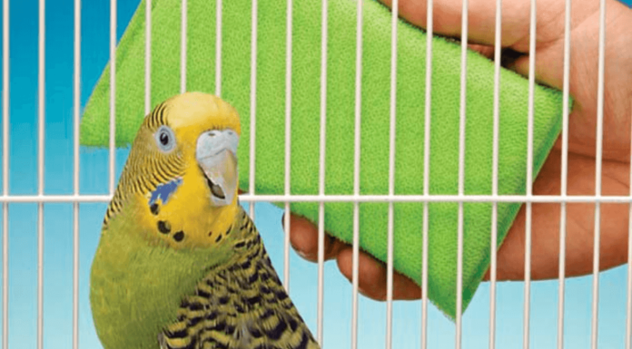 Clean the cage of his pet Parrot