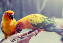 Foods toxic to the pet parrot