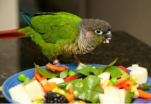 Fruits and vegetables for the pet bird