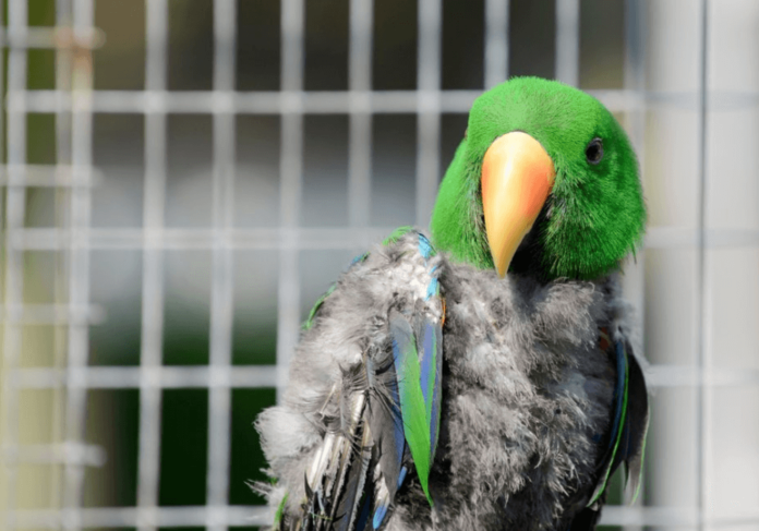 Stress in the Parrot
