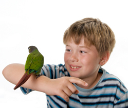 conure - How to distract a green cheek conure
