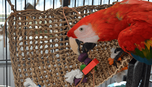 Parrot weight monitoring