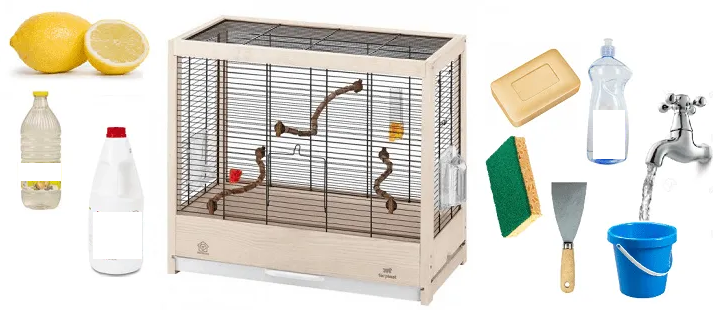 Education of young green cheek conure 14 - How to clean the cage of your parrot