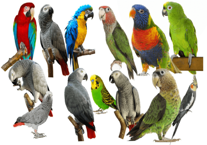 Parrot Breeders as we like them
