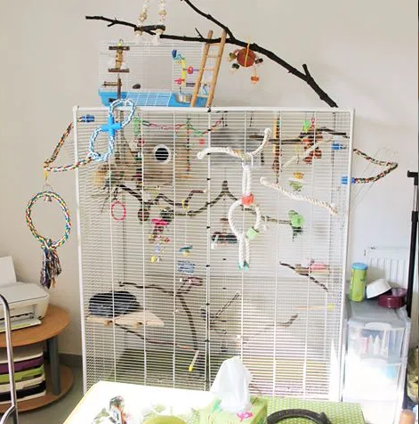 Successful cohabitation between many conure