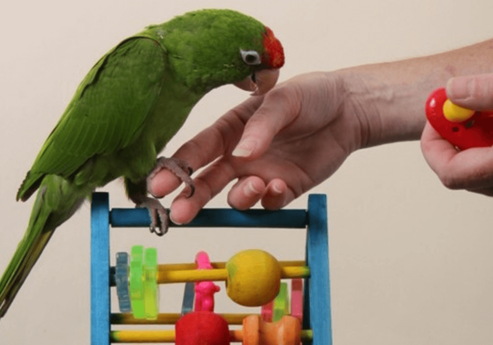 5 good reasons to adopt the clicker